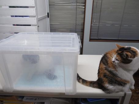 自宅猫と診療所猫