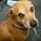 Thumbnail: Pet Portrait Painting Class