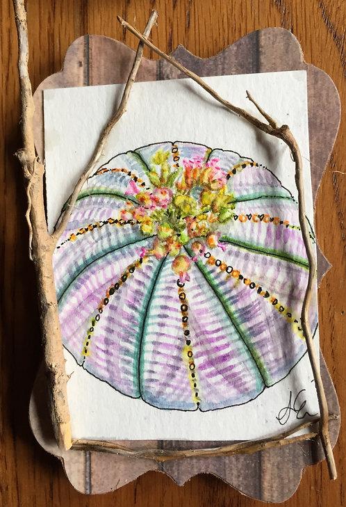 Spherical succulent