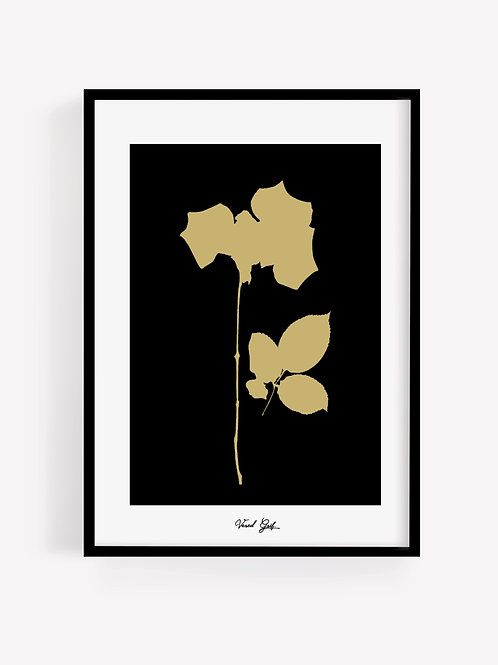 ורד זהב | Gold Rose
