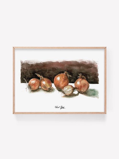 בצלים - ציור בצבעי מים | Onions