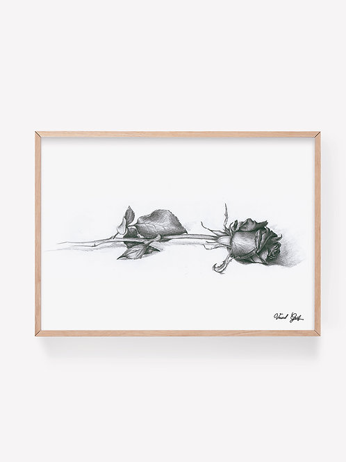Rose - pencil drawing