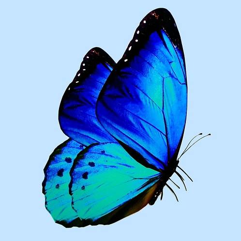Motýl profil