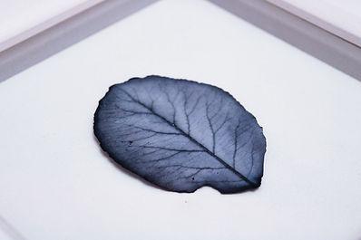 Winter Leaf (VI).jpg