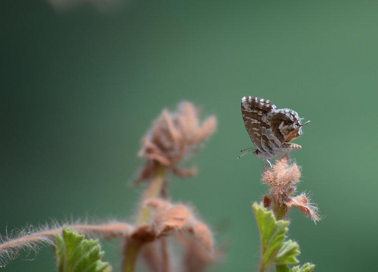 Butterfly%20on%20Branch_edited.jpg