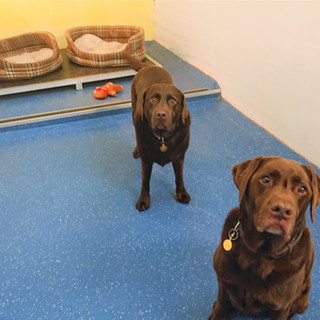 Kennels in Big Dogs