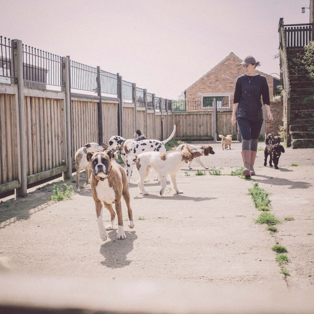 Moss End Kennels