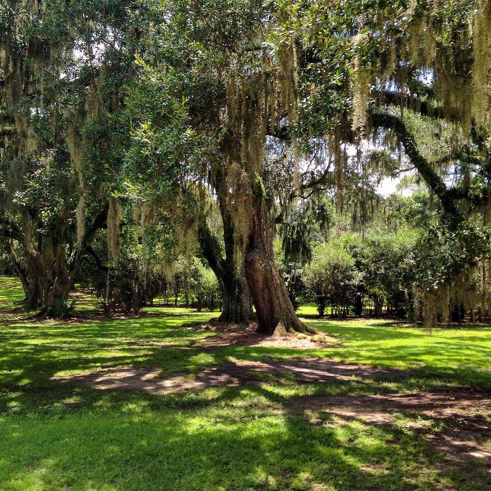 Avery Island, Louisiana