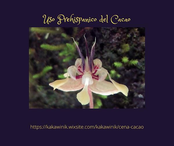 Uso Prehispanico del Cacao.png