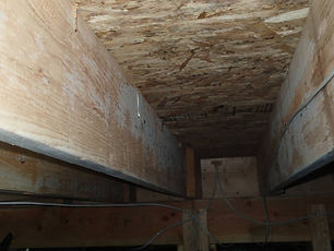 mold growth (under house).jpg