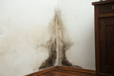 mold growth (wall).jpg