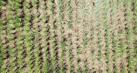 visual realization paddy field.png