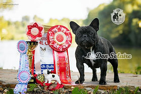 french bulldog kennell | MOSCOW