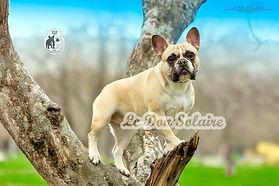 Щенки французских бульдогов ,питомник французских бульдогов , заводчики французских бульдогов ,купить щенка французских бульдога ,высоко породные щенки французского бульдога, #kennelfrenchbulldogledonsolaire#ledonsolaire#frenchilove#kennel frenchbulldog#ledonsolaireshow#ледонсолаире#puppiesfrenchbuldog#frenchie#frenchbulldogforsale#французскийбульдог#любимыефранцузики#французикимосква#французскийбульдогвыставки#щенкипитомникаledonsolaire#купитьфранцузскогобульдога#