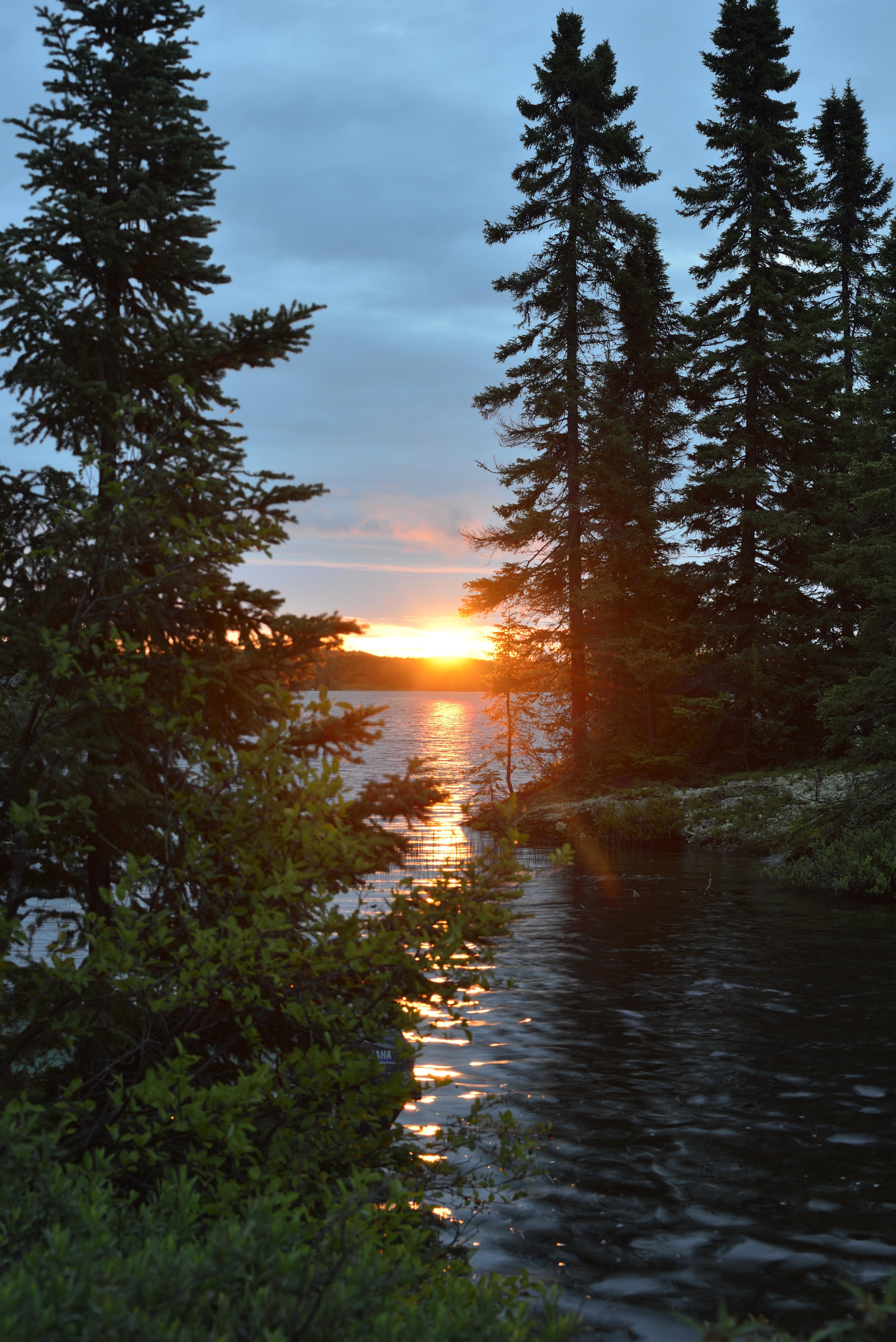 BFL orange sunset through trees