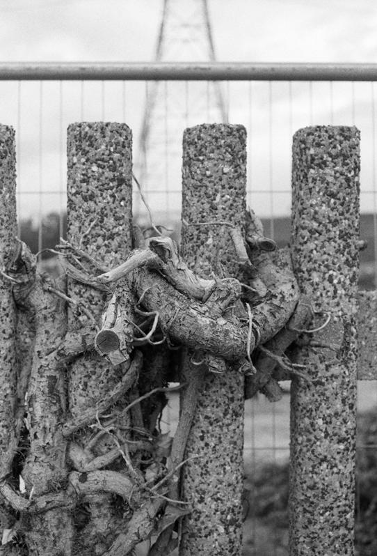 Roots, 35mm photograph, 248 x 355 mm