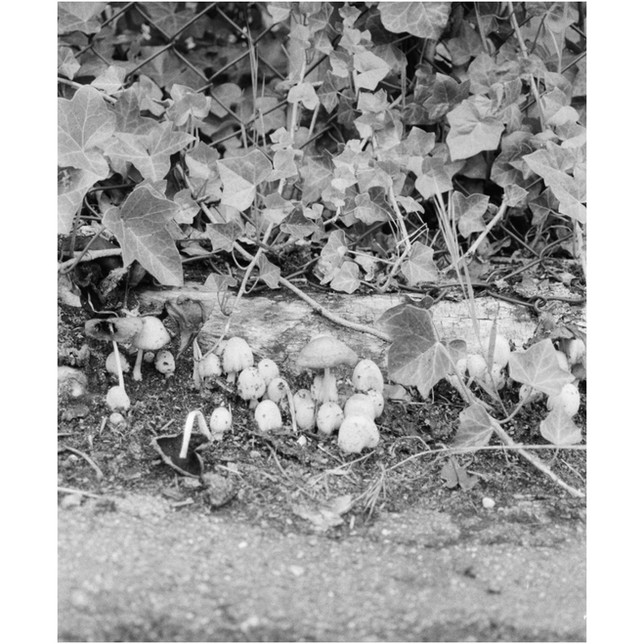 Mushrooms in the carpark, 35mm photograph printed on Hahnemuhle Photo Rag Paper.