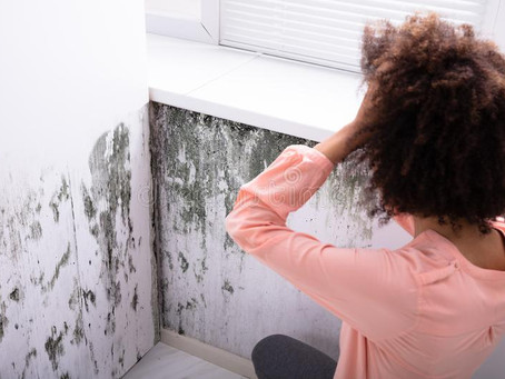 Do I need to test for Mold?