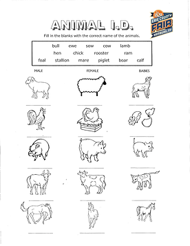 Color the Fair Book-2.png