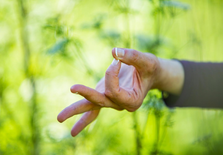 Bija Yoga Tasmania / Hobart / gyana mudra / hands / energy / meditation