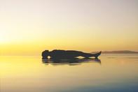 Yoga Nidra _ Bija Yoga Tasmania _ Sacred