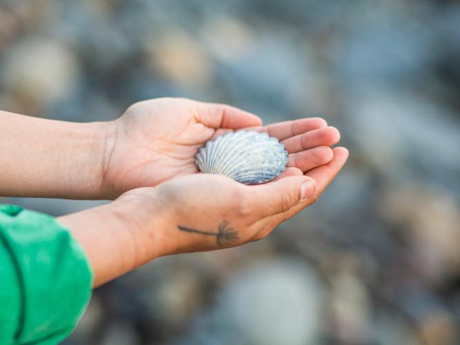 Bija Yoga Tasmania / Hobart / beach / shell / nature / kapha / hands / offering / give / recieve