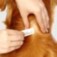 dog flea treatment being applied