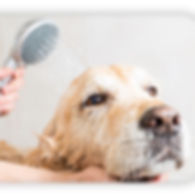 dog being bathed and groomed
