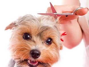 clipped dog
