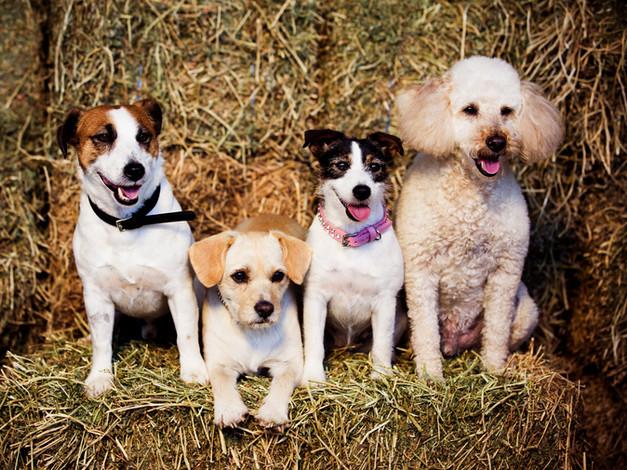 groomed dogs.jpg