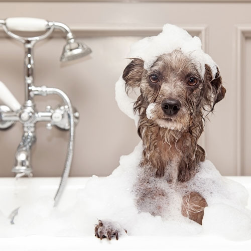 professional photo of dog bath and bubbles with dog shampoo