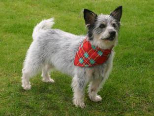 salon groomed dog photo