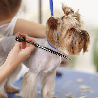 dog grooming in pet salon