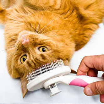 cat care and cat grooming with brush