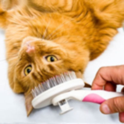 cat-care_cat-grooming_body1-right_edited