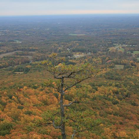 Fall at Pilot Mountain