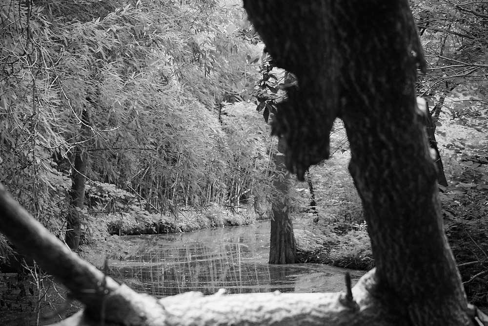 Black and white nature photo at The Bog Garden.