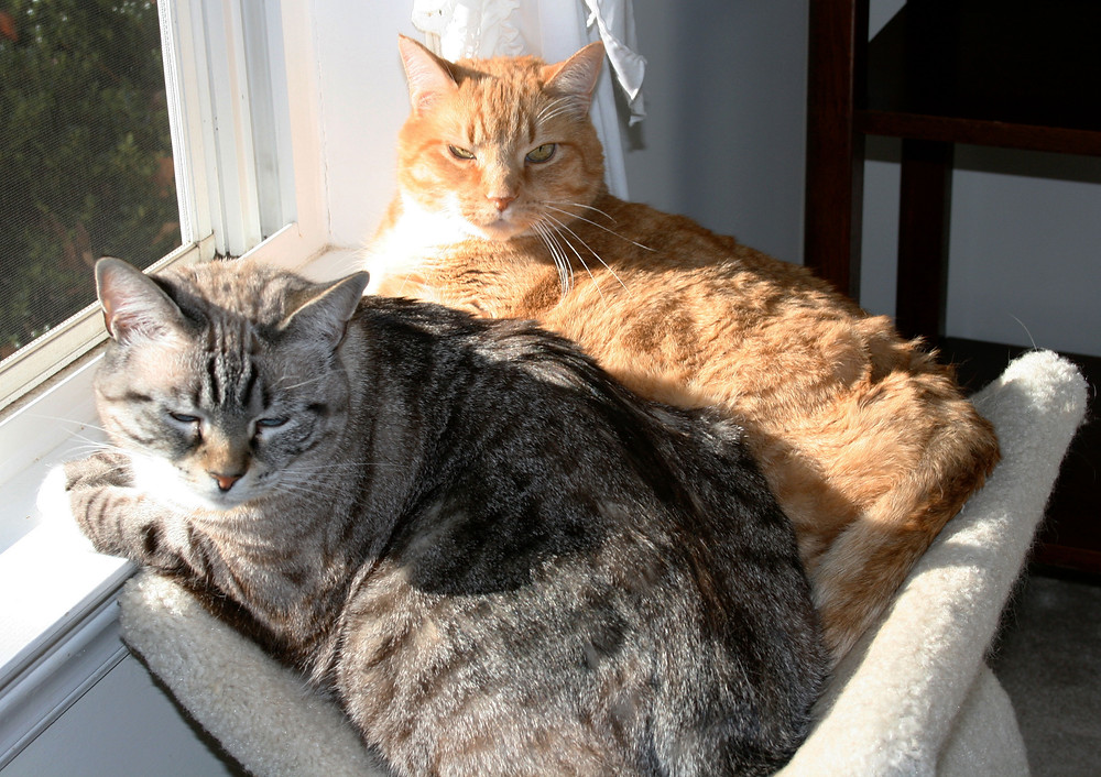 DC Snuggles & Tasha