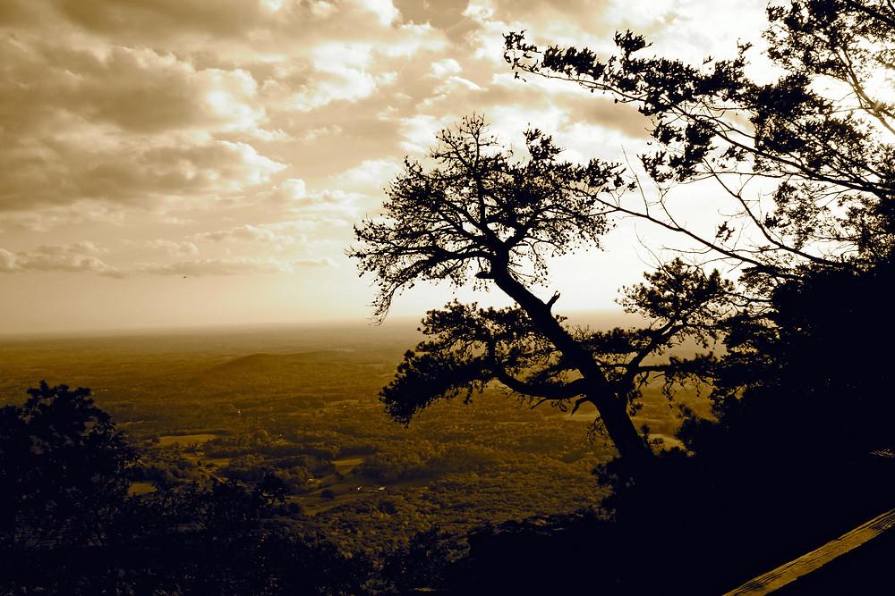Pilot Mountain Sepia Tree