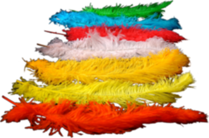Colored ostrich feathers for wedding decoration , and all occasions