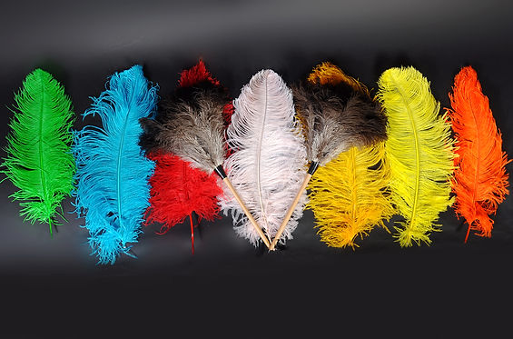 Premium high quality ostrich feathers and dusters