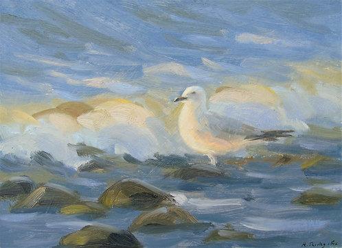 Gull at Sun down