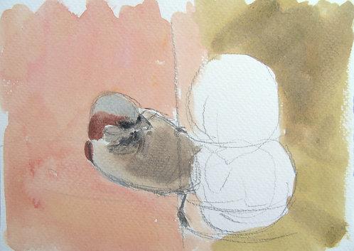 House Sparrow Sketch