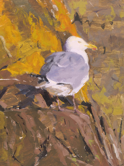 Gull in afternoon Light, Giclee Print