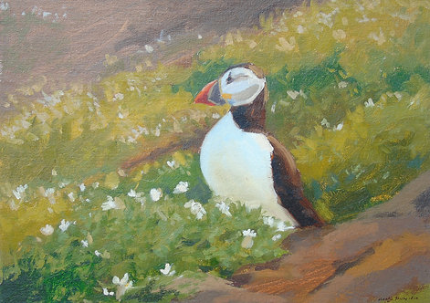 Puffin looking out of the Burrow