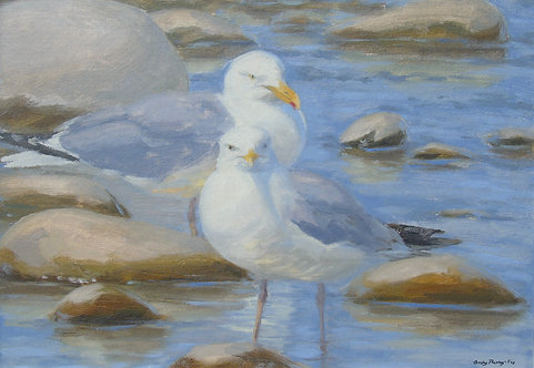 Gulls on Watch