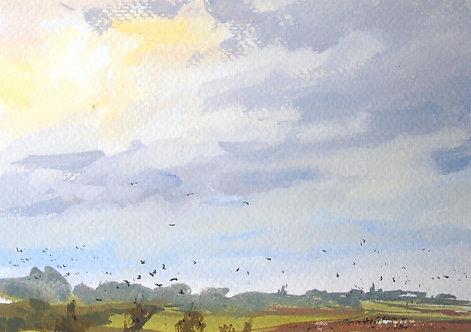 Crow Flocks