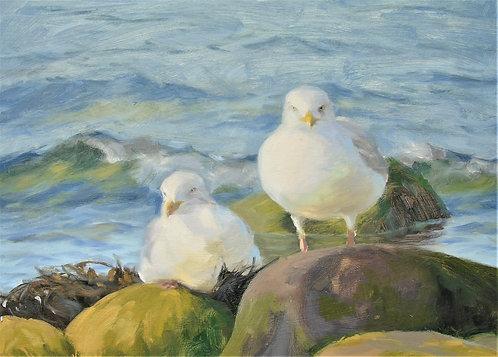 Gulls resting on the Shore