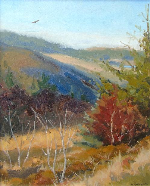 Buzzard soaring over the Hills