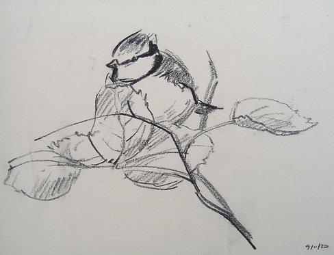 Blue Tit Charcoal Sketch